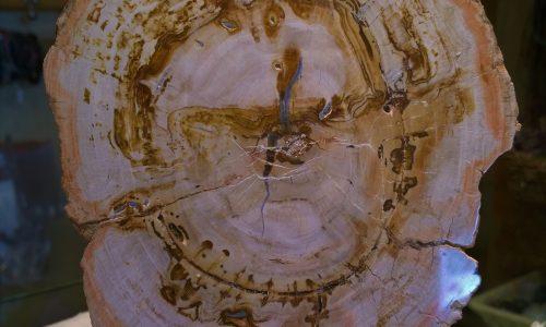 Sezione di Legno Fossile